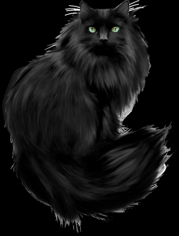 transparent black cat - HD800×1059