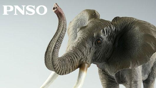 品牌介紹 - PNSO   ┤動 物 流 ANIMAL STREAMS├