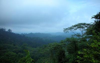 Bioma Hutan Basah
