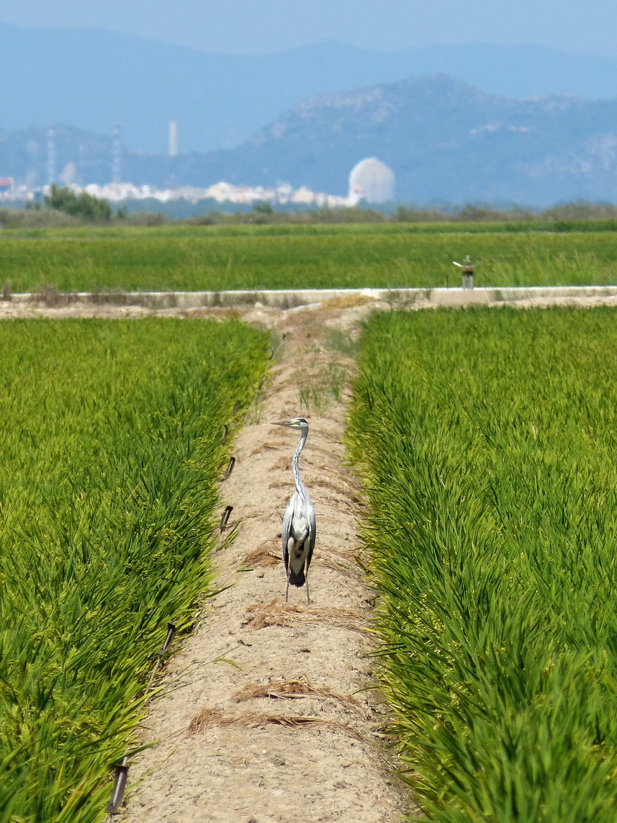"""ebro delta questionaire Parent company mailbox (comunicacion@ebrofoodses) advertising and   surveys and questionnaires  """"climate-smart agriculture"""" project (ebro delta)  15."""
