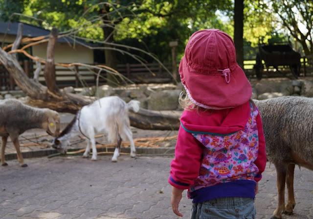 Naturgenuss pur: Der Tierpark Arche Warder. Wir haben im Rahmen des Naturgenussfestivals Schleswig-Holstein den Tierpark Arche Warder besucht und mit der spannenden Rallye für seltene Nutztierrassen von vorne bis hinten erkundet. Ein toller Ausflug (nicht nur) für Familien mit Kindern, den ich Euch auf Küstenkidsunterwegs näher vorstelle!