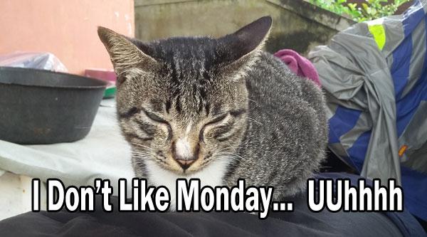Kucing saya di rumah yang hobinya tidur dimana saja yang dia suka. Apakah dia suka hari Senin atau tidak? Nanti saya tanyakan ke kucing saya ya. Just kidding.  Foto Asep Haryono