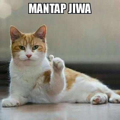10 Meme Kucing Ini Lucu Dan Imut Banget Cak Mol