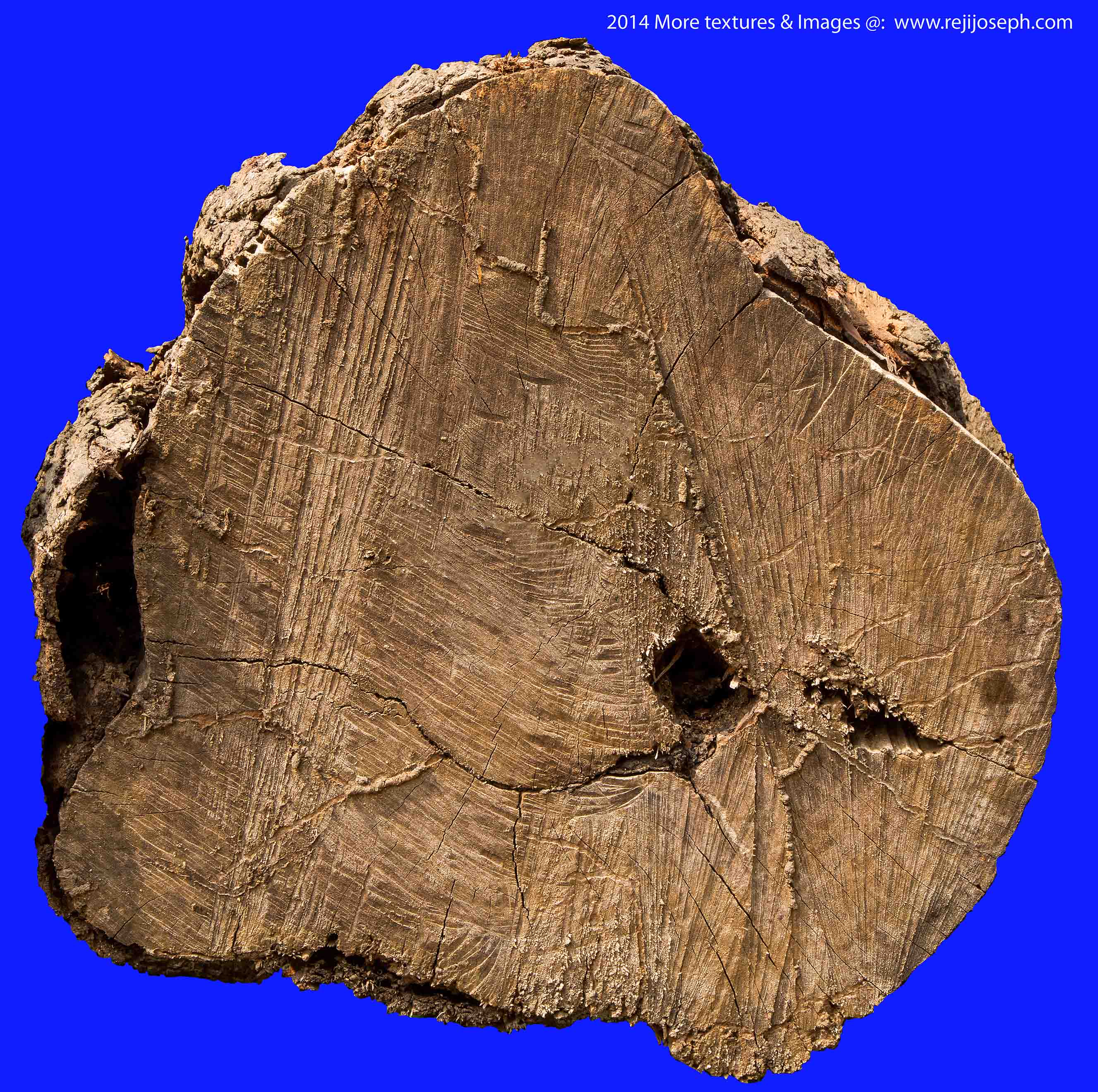 Wood Tree Trunk texture 00004