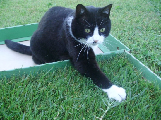 Rumore di fusa green in box un prato di vera erba per for Erba per gatti