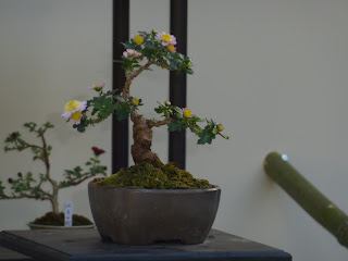 A little miniature bonsai tree with flowers in the Sorakuen Gardens, Kobe