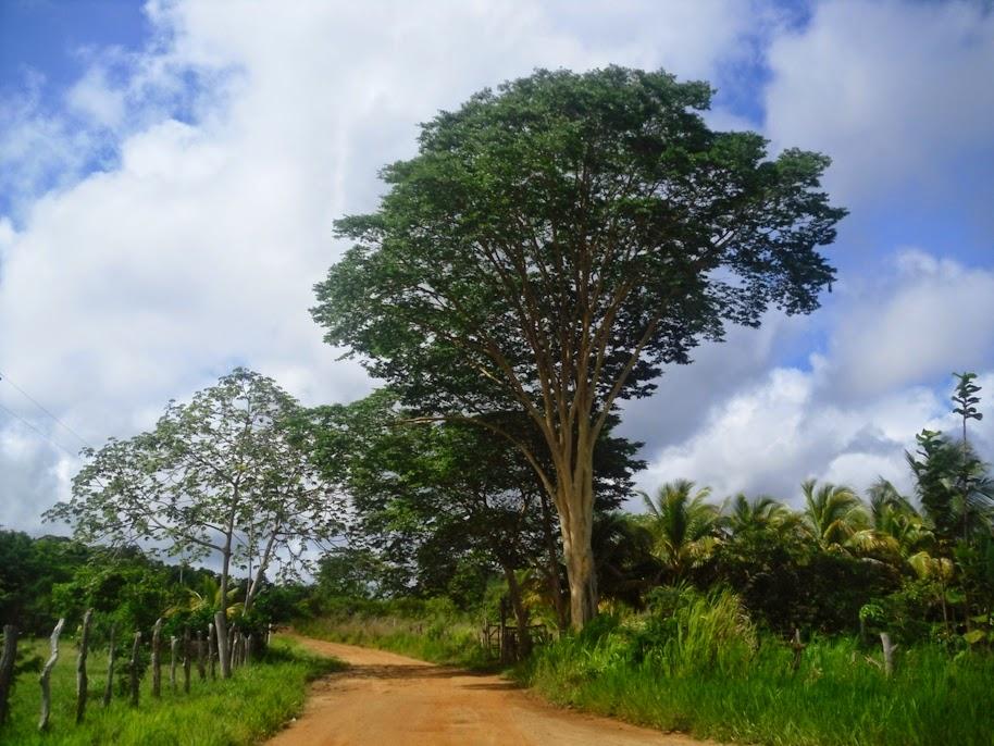 copac de bani împotriva varicozei