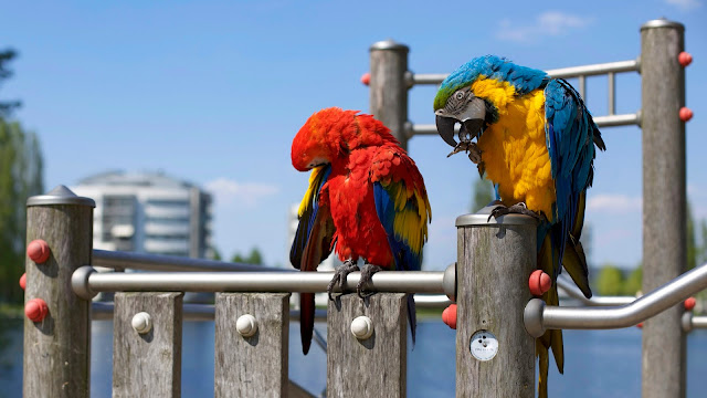 Colorful Parrots Set on the Steel Grill HD Wallpaper