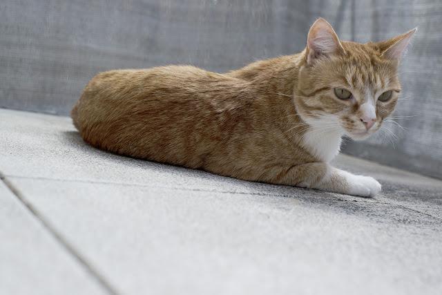 Katzen-Haustiere-Influencer-Andrea-Funk-andysparkles