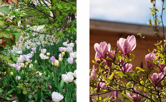 Blomstrende forår i Paris
