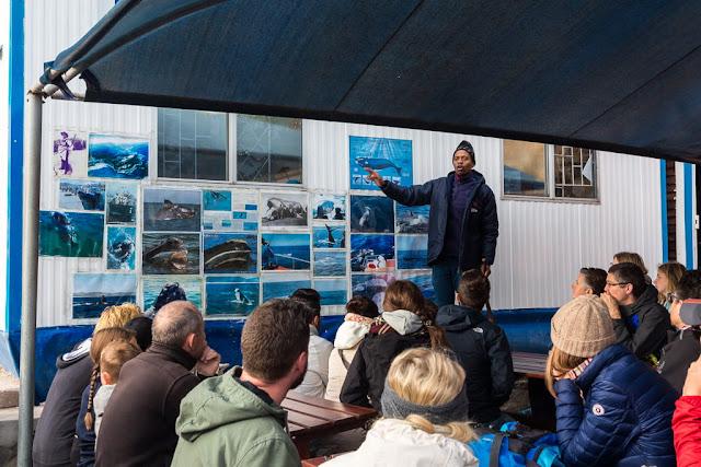 Explicación sobre las ballenas en Hermanus, Sudáfrica