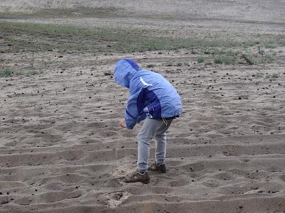 Pustynia Błędowska, porosty na Pustyni Błędowskiej, grzyby na Pustyni Błedowskiej, grzyby na wiosnę, grzyby w maju, storczyki w Polsce, wielka piaskownica, Gęstoporek cynobrowy Pycnoporus cinnabarinus, Piestrzenica kasztanowata Gyromitra esculenta, Chrobotek strzępiasty Cladonia fimbriata