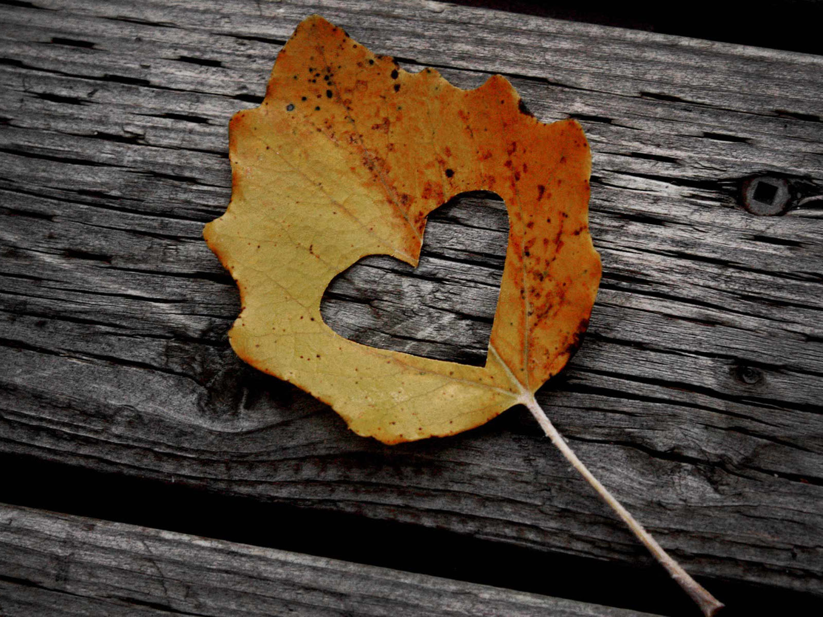 nature wallpapers leaf autumn lovely heart background fall quotes desktop romanticism cool hearts cute enjoy word romantic foi intuitie para