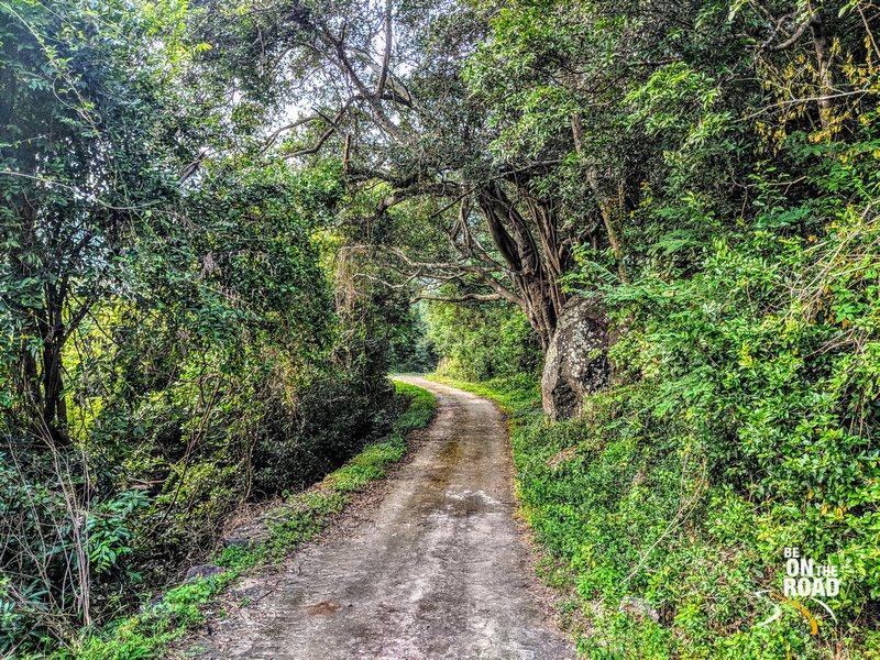 A forest road - Kalakad Mundanthurai Tiger Reserve