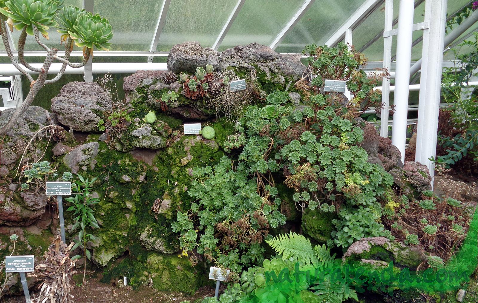 rocalla de plantas secas