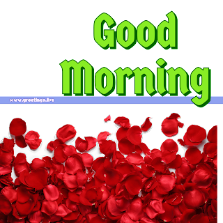 What's app stickers good morning wishes red flowers