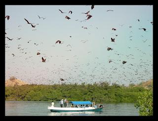 Pulau Ontologi Taman Wisata alam 17 Pulau Riung