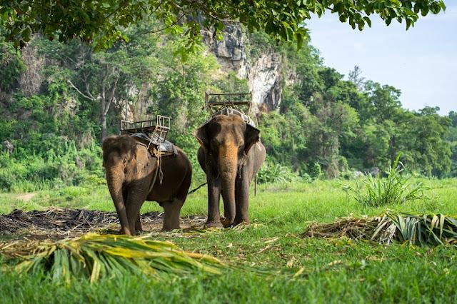 Ban Kwan Chang Elefant Camp