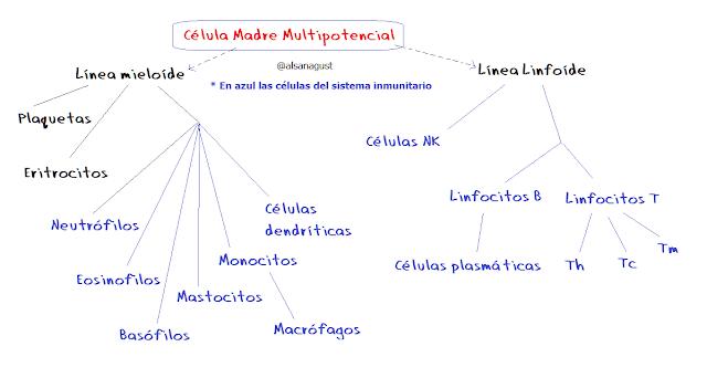 sistema inmunitario, células sanguíneas, células inmunitarias
