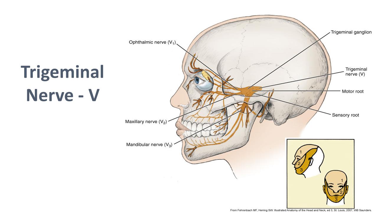 SER SERVIDOR: Local anesthesia – pain control in dental hygiene