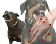 Cuando su perro comienza a ladrar , morder o exhibe un comportamiento hostil e intimidante, es probable, y posible que tenga un animal peligroso y agresivo