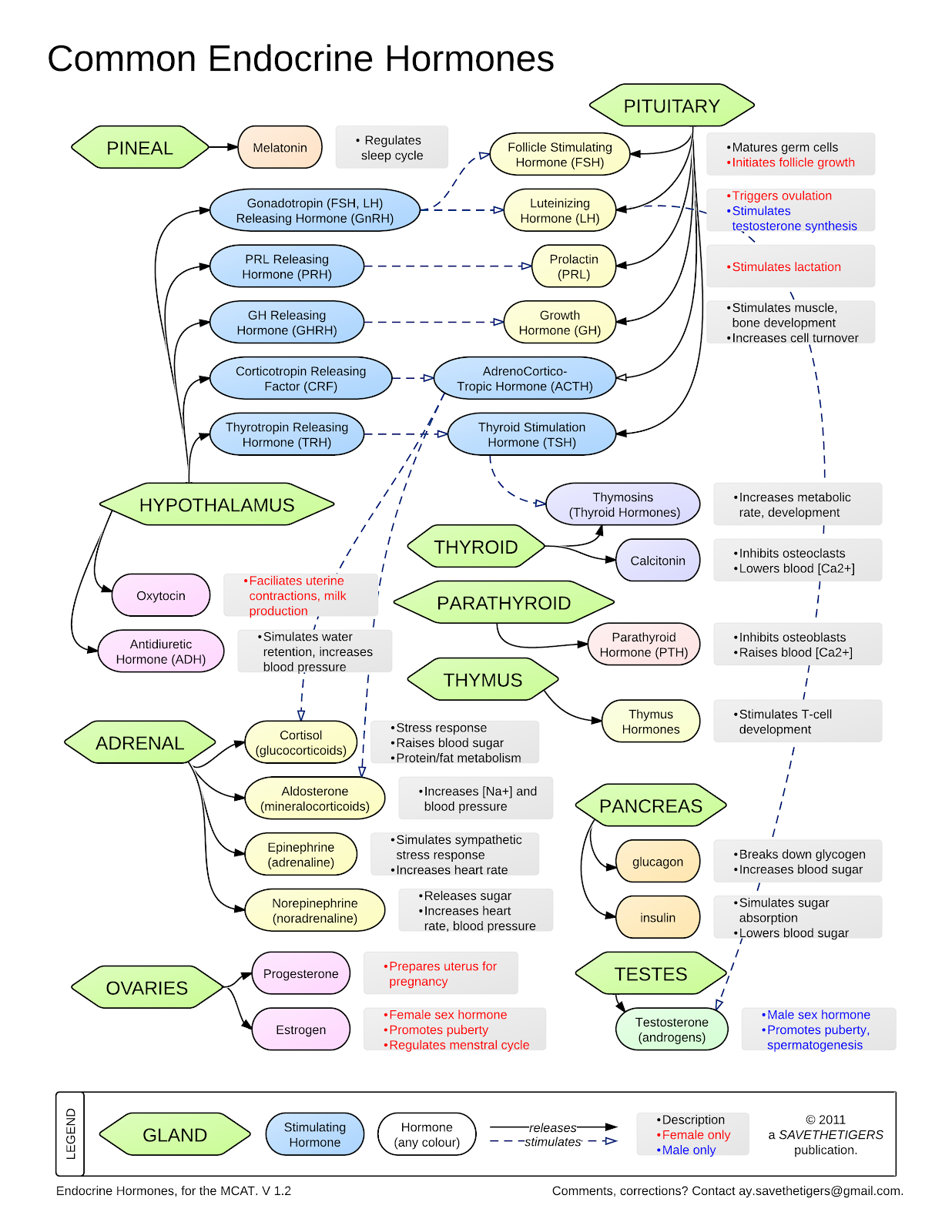 Common Endocrine Hormones On Meducation