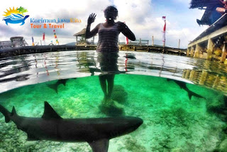 ikan hiu penangkaran karimunjawa