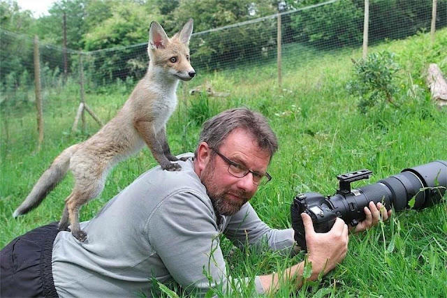 Fox on Photographers Back