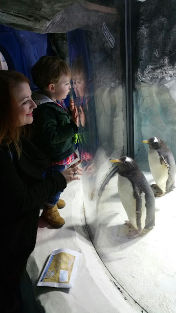 Penguins at Sea Life Centre Birmingham - To Become Mum