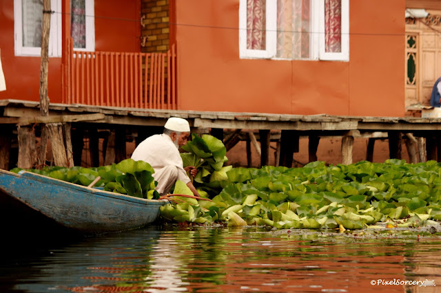 Selling at Dal Lake, travel itinerary for kashmir