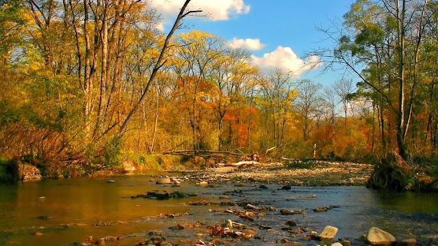 Rivier in een bos in de herfst