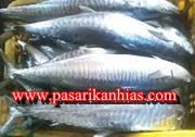 Harga Jual Ikan Gindara Per Kg