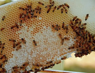 20 unusual uses for honey you never thought of