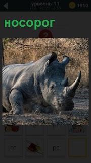 Животное носорог лежит на земле на 11 уровне в игре словесного жанра 1000 головоломок