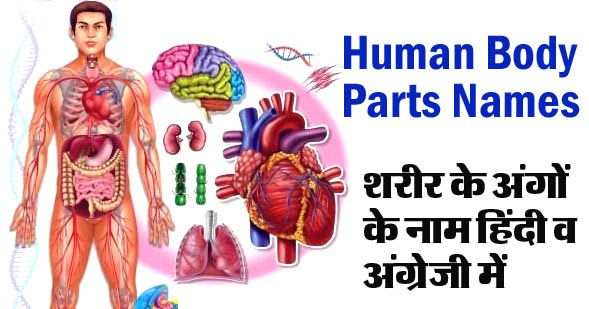 Body parts name in hindi and english pdf