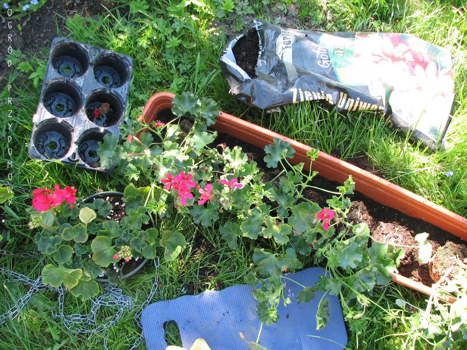 Ogrod Za Grosze W Jaki Sposob Sadze Kwiaty Do Donic Ogrod