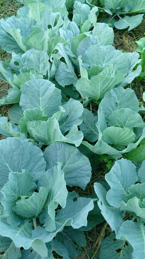 www.kasetnewlife.com รับสอน ทำอาหารเสริมพืชนาโน อาหารเสริมพืช ทำให้พืชโตเร็ว
