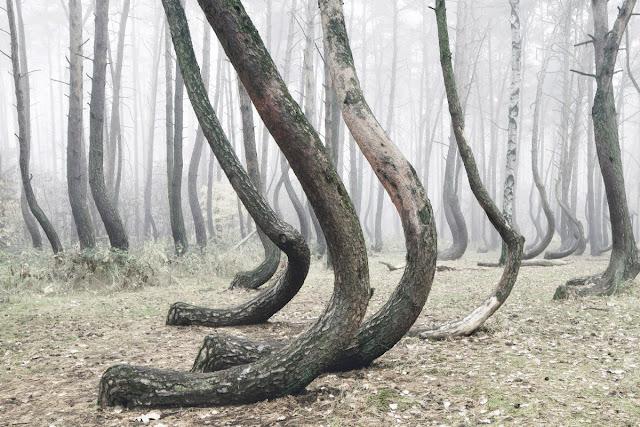 الغابات الملتوية