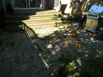 Toronto gardening services Bracondale Hill backyard cleanup before by Paul Jung