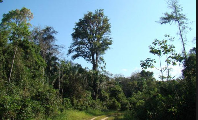 Al menos 100 personas invadieron el último bosque de la biodiversidad de los Llanos Occidentales