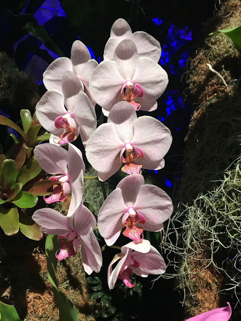 Missouri Botanical Gardens orchids