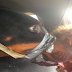 Rescuer Saves Dog From Owner Who Taped His Mouth Shut