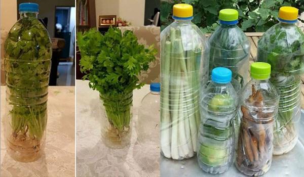 Mahu Sayur Tahan Lebih Lama & Segar, Hanya Guna Botol Air ...