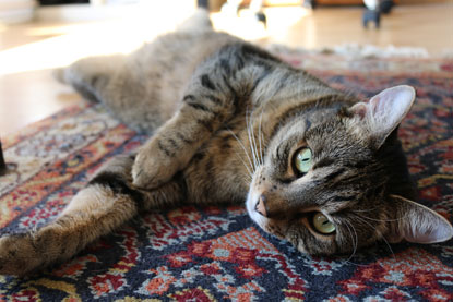 Cat relaxing on a rug