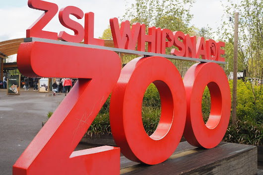 ZSL Whipsnade Zoo: New Elephant Care Centre