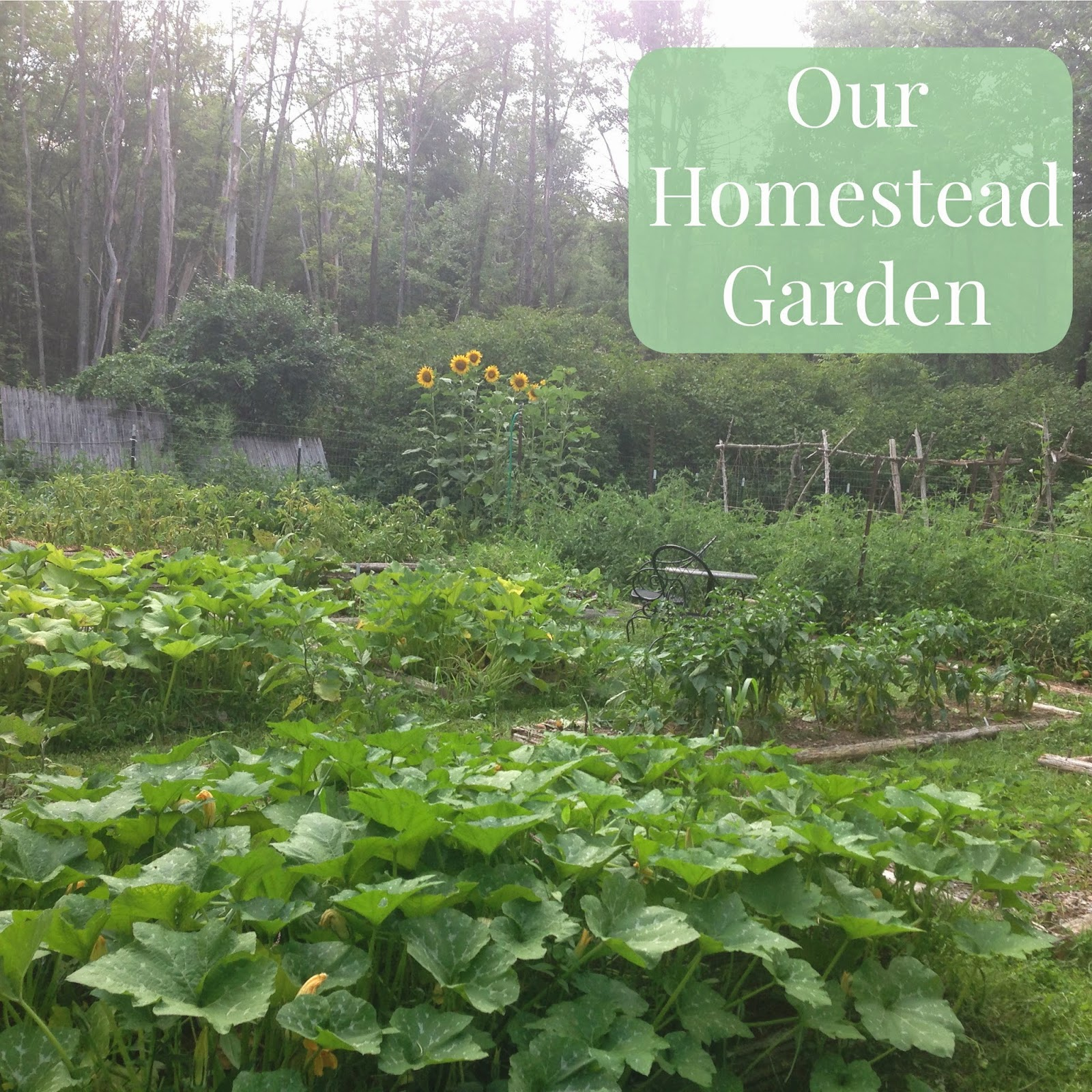 Homestead Gardens Landscaping: Linn Acres Farm: Tour Of Our Homestead Garden