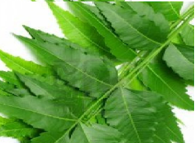How to use neem to protect the liver