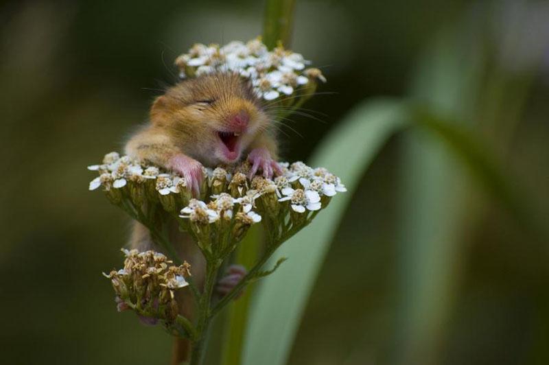 http://2.bp.blogspot.com/-Xh7fX6arNJI/T3sP0cUn0vI/AAAAAAAAIJQ/gWm-45thvzI/s1600/flower+animal.jpg