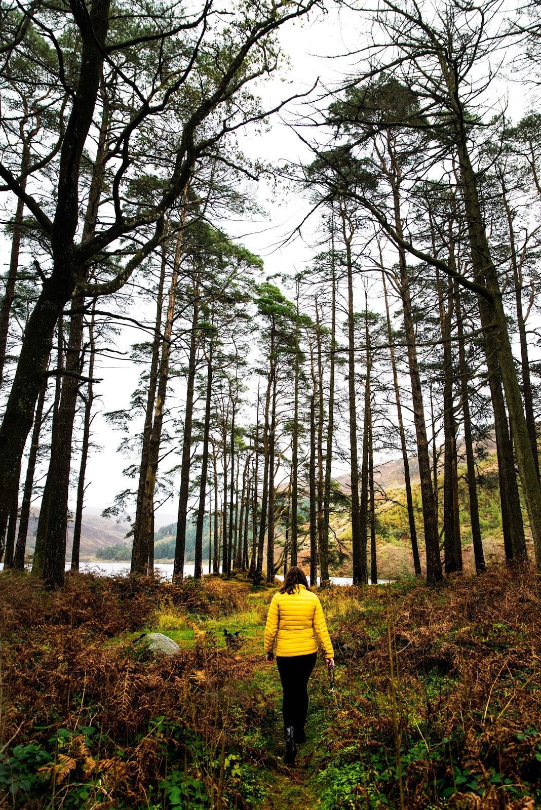 winter walk scotland galloway forest liquid grain liquidgrain kathryn