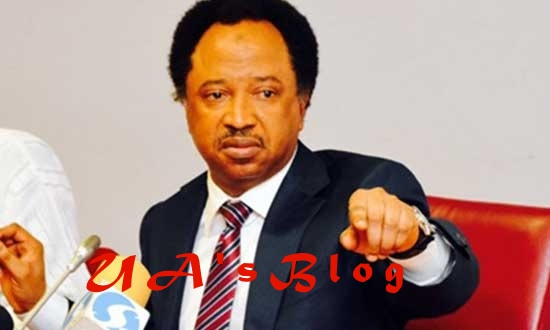 Why Buhari's 'failure' won't stop his victory in 2019 – Shehu Sani